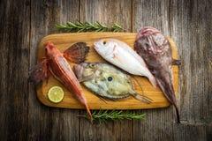 Fresh saltwater fish Stock Images