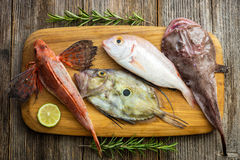 Fresh saltwater fish Royalty Free Stock Images