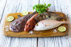 Fresh saltwater fish Stock Photography