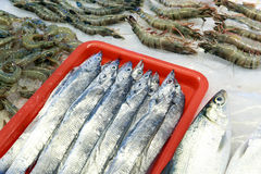 Fresh saltwater fishes Royalty Free Stock Image