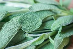Fresh Salvia Leaves On Wooden Table Macro Royalty Free Stock Photo
