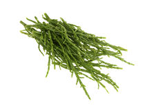 Fresh Samphire Stock Photography