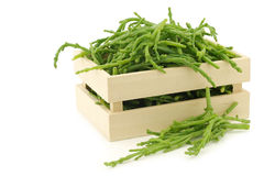 Fresh Samphire Royalty Free Stock Image