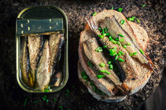 Fresh sandwich wirh sprats with and chive Royalty Free Stock Photos