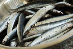 Fresh Sardine Stock Image