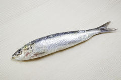 Fresh sardine Royalty Free Stock Photography