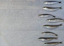 Fresh sardine Royalty Free Stock Photos