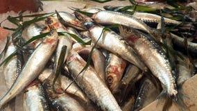 Fresh sardine at a market in Italy Royalty Free Stock Photos