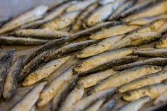 Fresh sardine seafood Stock Image