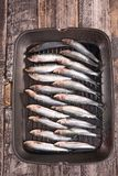 Fresh sardine Stock Photos