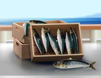 Fresh sardine in the wooden crate from the sea. A wooden crate on the table which containing fresh sardine from the sea using for products presentation,canned Royalty Free Stock Photography