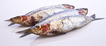 Fresh Sardines Stock Image