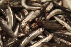 Fresh Sardines. Piled in a bin at a market Stock Photography