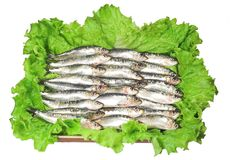 Fresh sardines. Over lettuce stock photos