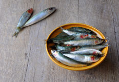 Fresh sardines in a bowl. Image of fresh sardines in a bowl on a wooden table Stock Photography