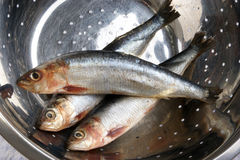 fresh sardines are cleaned before cooking Stock Photo