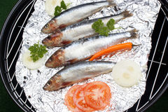 fresh sardines before cooking as food Stock Photography