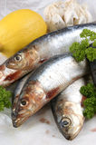 fresh sardines before cooking as food Stock Photo