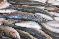 Fresh sardines displayed on the fish market Royalty Free Stock Photography