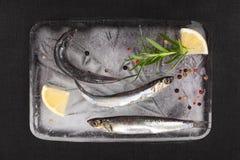 Fresh sardines fish on ice. Royalty Free Stock Photo