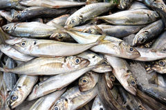 Fresh Sardines Fish at the market Stock Image