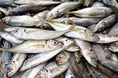 Fresh Sardines Fish at the market Stock Image