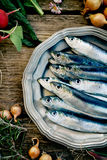 Fresh sardines Royalty Free Stock Photo
