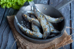 Fresh sardines. Fish with vegetables. Stock Photography