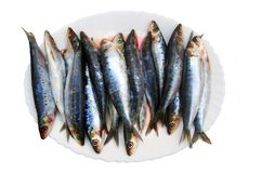 Fresh sardines fish on the white plate, isolated stock images
