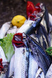 Fresh sardines. On the fishmonger stall at the local market, Antalya Royalty Free Stock Photography