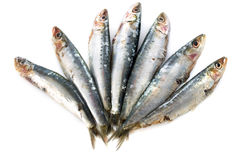 Fresh sardines. In front of white background Stock Photos
