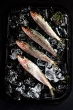 Fresh sardines on ice bed Stock Images