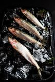Fresh sardines on ice bed Royalty Free Stock Image
