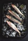 Fresh sardines on ice Stock Photos
