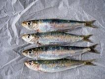 Fresh sardines on kitchen paper Royalty Free Stock Photos