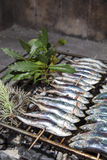 Fresh sardines, mackerel fishes on BBQ grill Royalty Free Stock Image