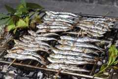 Fresh sardines, mackerel fishes on BBQ grill Stock Photos