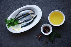 Fresh sardines. Omega 3. Fish with herbs. Mediterranean fish on plate Royalty Free Stock Images