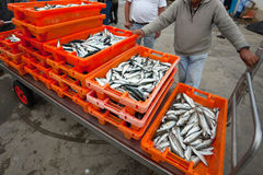Fresh sardines in orange  box Stock Images