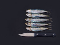 Fresh sardines with paring knife on grey board Stock Photo