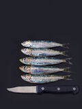 Fresh sardines with paring knife on grey board. Royalty Free Stock Photo