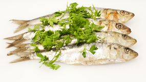 Fresh sardines with parsley leaves Royalty Free Stock Images