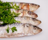 Fresh sardines with parsley leaves Royalty Free Stock Photo