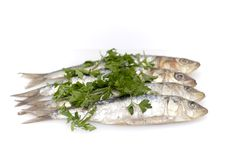 Fresh sardines with parsley leaves Stock Photography