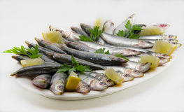 Fresh sardines Stock Images