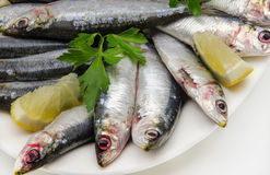 Fresh sardines Royalty Free Stock Image