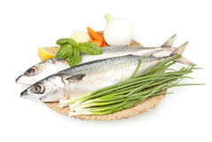 Fresh sardines on a plate Stock Photography