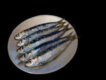 Fresh sardines on a plate on black Royalty Free Stock Photos