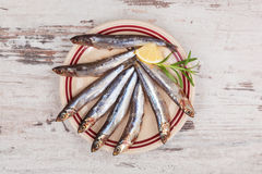 Fresh sardines on plate. Royalty Free Stock Photo