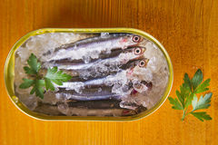 Fresh sardines Royalty Free Stock Photos